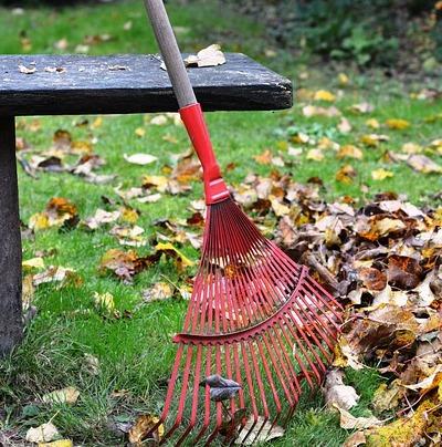 Rain Garden Clean Up